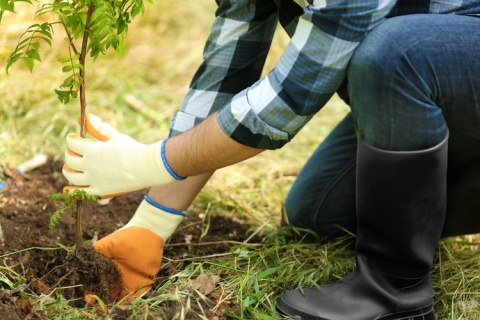Ecological reward (Plant a tree)
