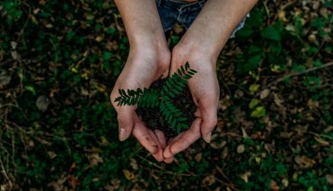 Pelo seu donativo de 50€ terá a satisfação de contribuir para a plantação de 5 árvores em Cabo Verde.