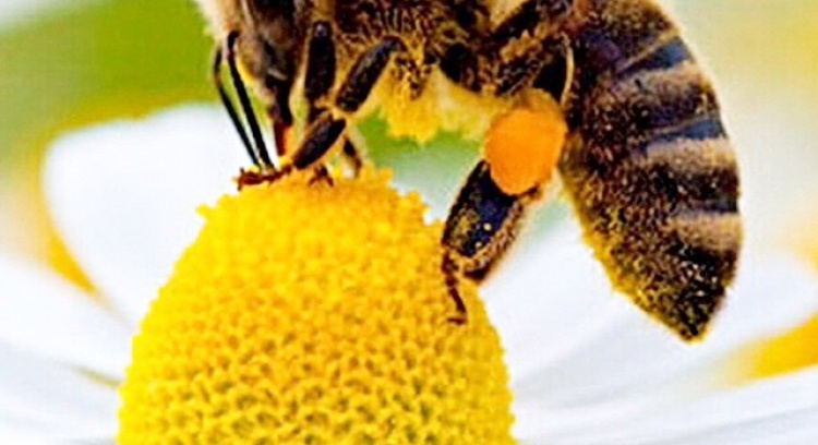 BeeHive - saving the bees is preserving the future