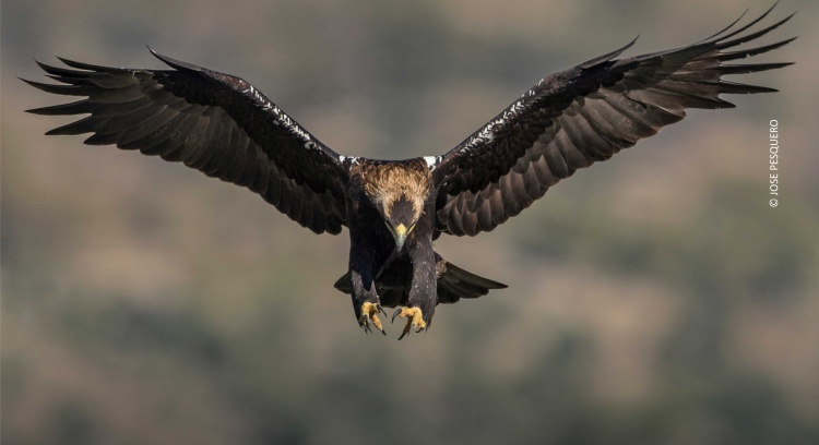 Preserve the Iberian Imperial Eagle
