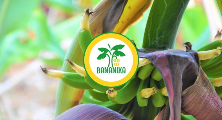 DRINK SUSTAINABLE - DRINK BANANIKA!