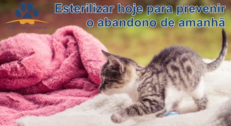 Spay/Neuter today to prevent tomorrow's abandonment
