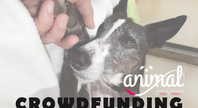 Angariação de fundos ANIMAL
