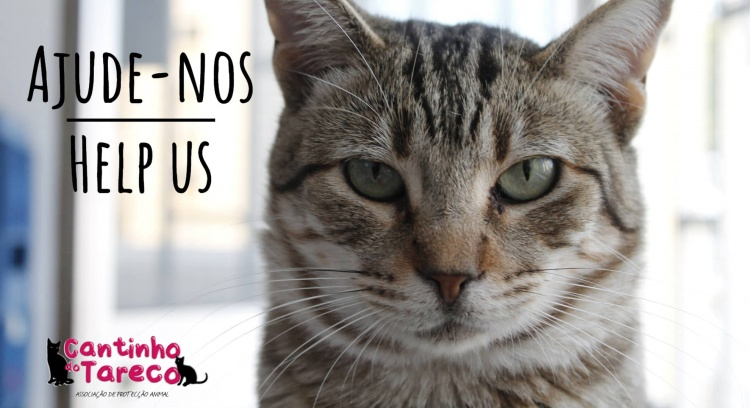 Aumento do nosso gatil: para continuar a ajudar mais e melhor