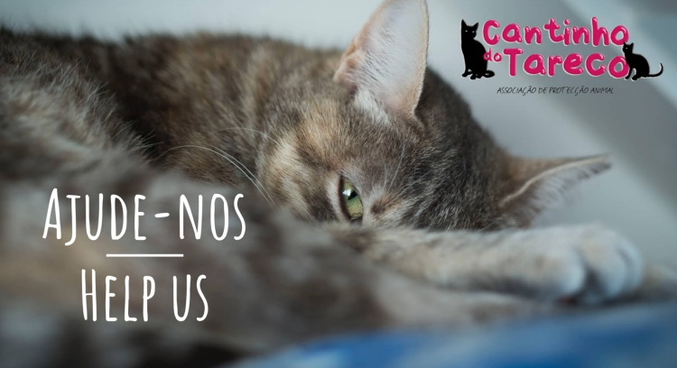 Help us to pay off our veterinary bills