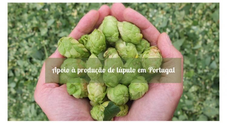 Apoio à produção de lúpulo em Portugal