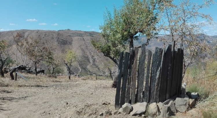 HELP this project! Planting Almond Trees, Olive Trees and finishing a Master Degree about one Douro beautiful village!