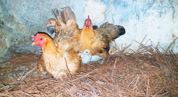 Sanctuary for farm animals