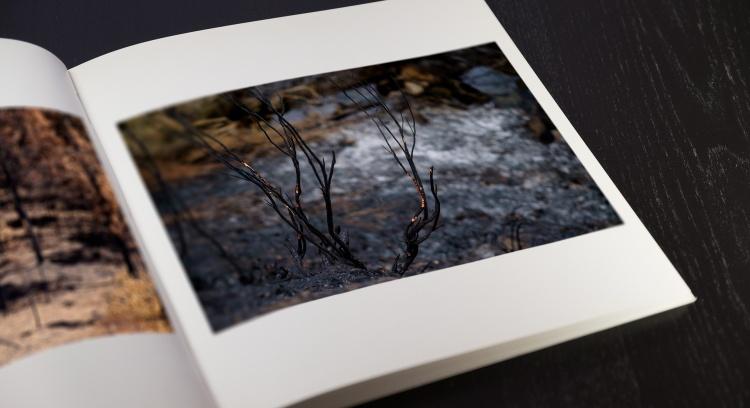 Floresta Negra - O Livro