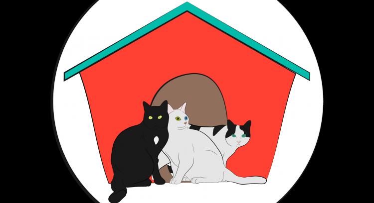 Quintinha Abc: aqui começa a história de um verdadeiro gatil