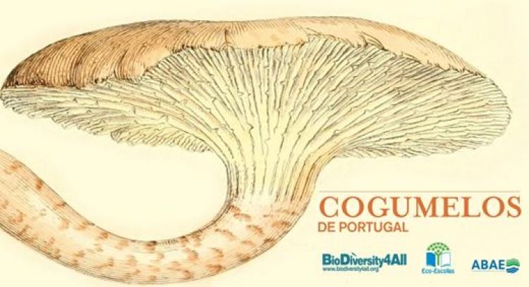 Cogumelos de Portugal
