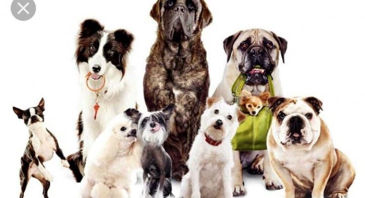 Help us sterilize street animals