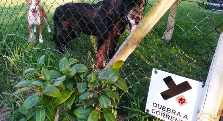 Vedações para libertar cães acorrentados