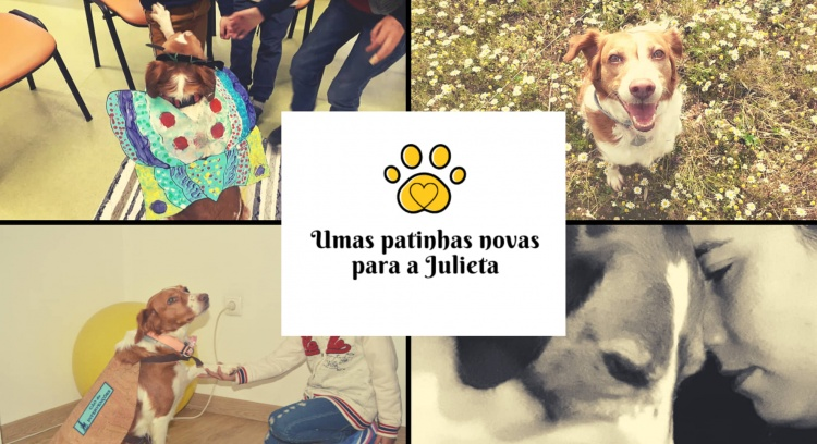 A NEW PAWS FOR JULIETA